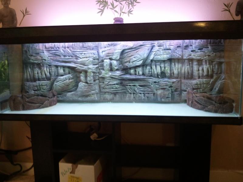 Decoration Zen Aquarium : Mon aquarium de l