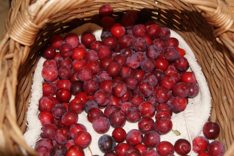 Confiture de prunes sauvages - Confiture de mures sauvages maison ...