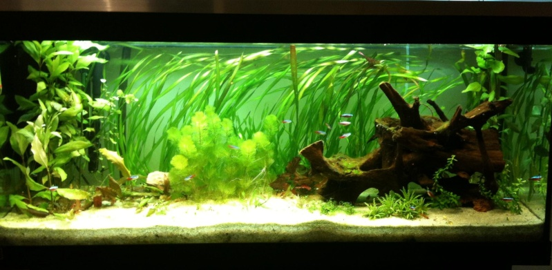 bac 240 litres type amazonien nouvelle plante new photo. Black Bedroom Furniture Sets. Home Design Ideas