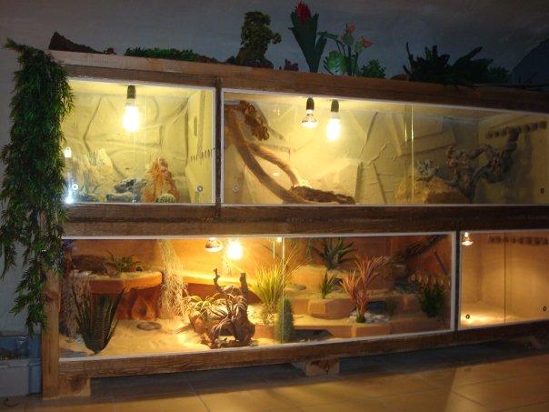 d cor pour terrarium crotaphytus collaris. Black Bedroom Furniture Sets. Home Design Ideas