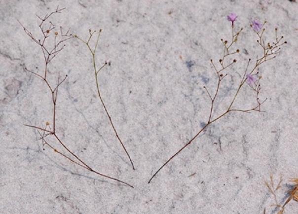 Une plante qui pi ge les animaux enfouis sous le sable for Cherche jardinier 78