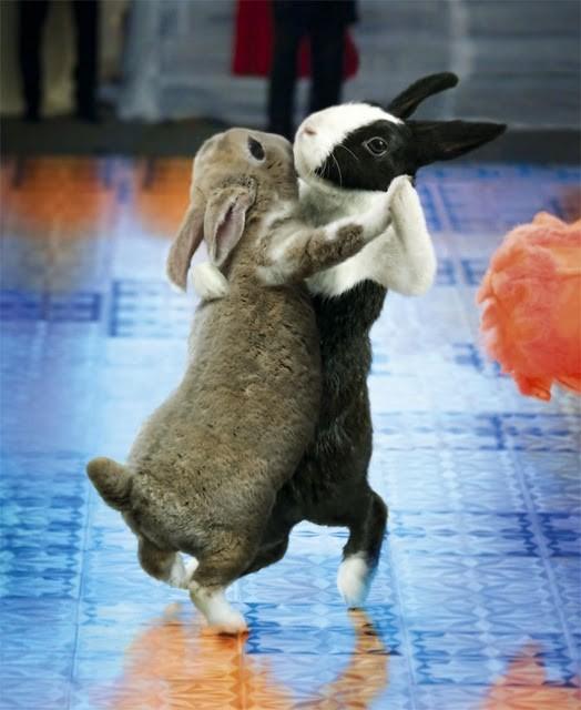 Le tango dans la