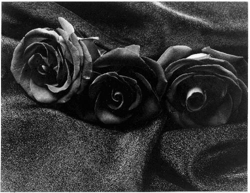 ورودسوداء,الورد,الاسمر,الورود,السمراء,صور,خلفيات,سمراء,أسمر,أسود