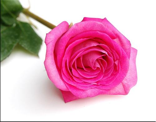معانى,ألوان,الورود,ورود,مدهئة,الورود,خلفيات,صور