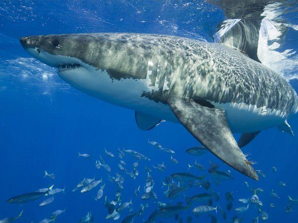 shark10.jpg