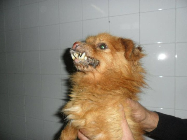 Ditemi voi se un cane ridotto cos deve stare in canile - L insegnante di sostegno deve accompagnare l alunno in bagno ...