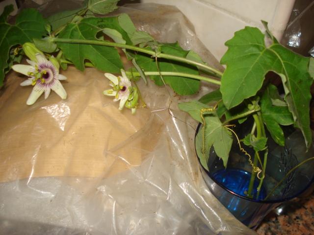 Le bouturage ne doit handicaper personne - Quelles sont les plantes que l on peut bouturer ...