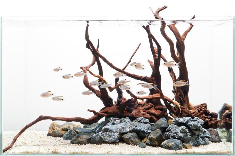Refonte du d cors d 39 un aquarium for Racine aquarium