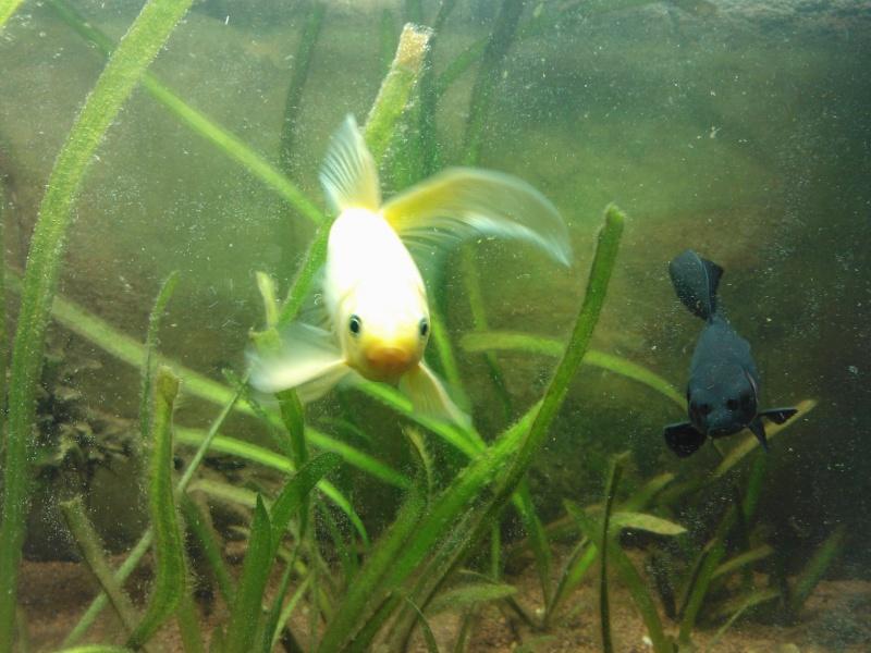 Les d m nagements de bulle page 2 for Bac a poisson jardiland