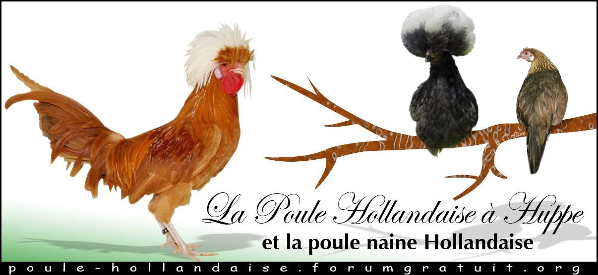 La Hollandaise à Huppe
