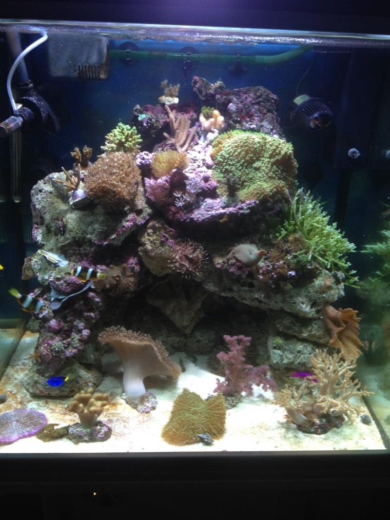 conseil aquarium débutant