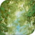 Land der Wälder