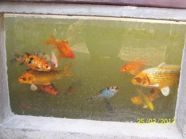 Mon bassin for Bassin a poisson eau trouble