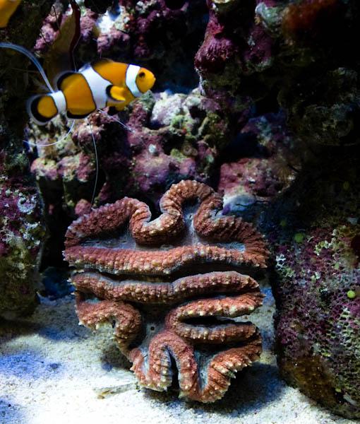Recifal france mon aquarium de 200 litres zeph for Aquarium 200 litres